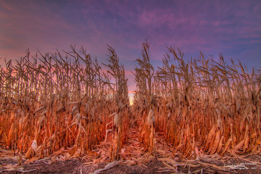 Ash Mesa Cornfield at Dawn