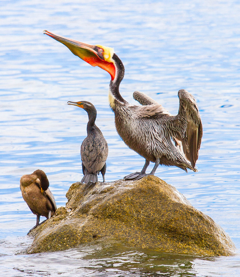 Pelican and Buddies Taking a Break